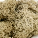 Lichen premium Naturel