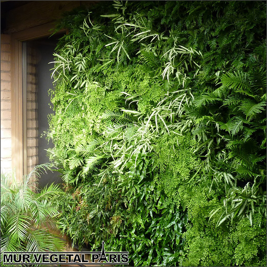 Mure vegetale exterieur cool creer un mur vegetal for Jardin vegetal exterieur