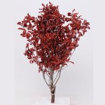 Pittosporum stabilisé rouge