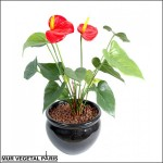 Anthurium rouge artificiel