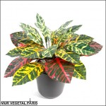 Croton artificiel