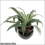 Dracaena white jewel artificiel