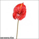Fleur d'anthurium rouge artificielle sur tige